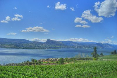 Naramata Vineyards over looking Okanagan Lake