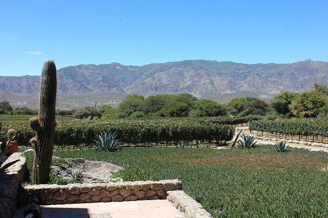 vineyard at Bodega Colomé in Salta Argentina where Malbec vines sit at over 9000 feet