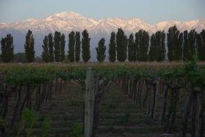 Sunrise in Mendoza, Flickr Tony Bailey
