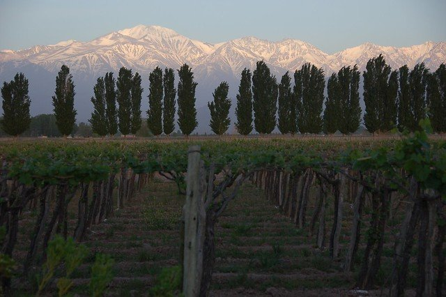 Sunrise in Mendoza, Flickr Tony Bailey